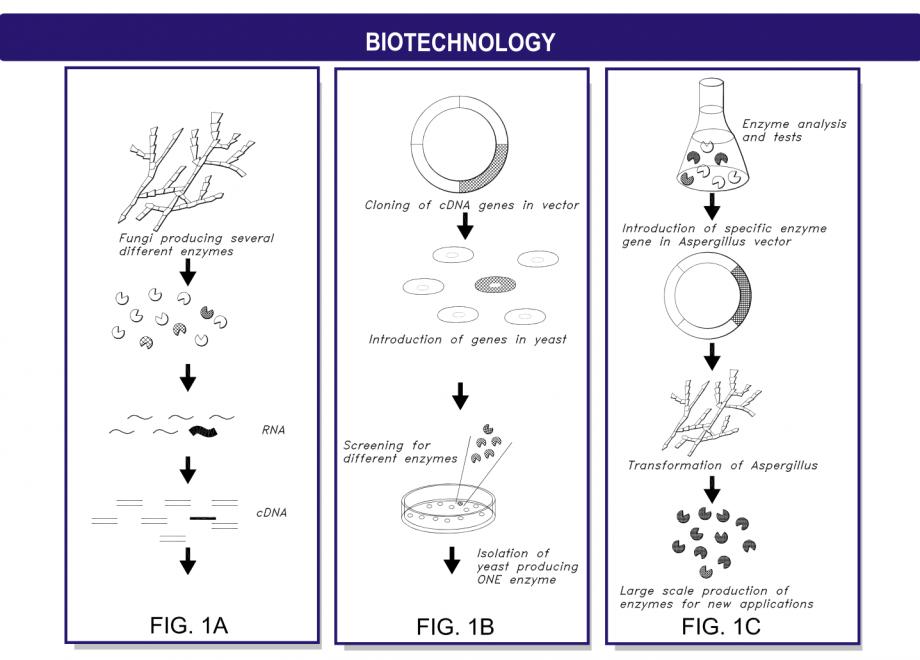 Biotchnology-Legal-Graphics