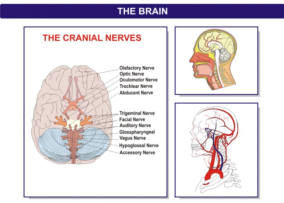 Brain-Presentation-Blow-ups